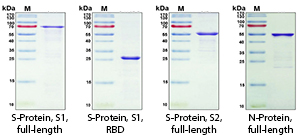 COVID-19 Proteins SDS-PAGE