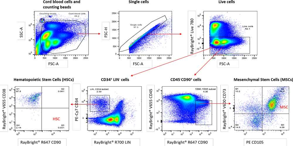 Stem Cell analysis for Mesenchymal and Hematopoietic stem cells from cord blood and other source material.