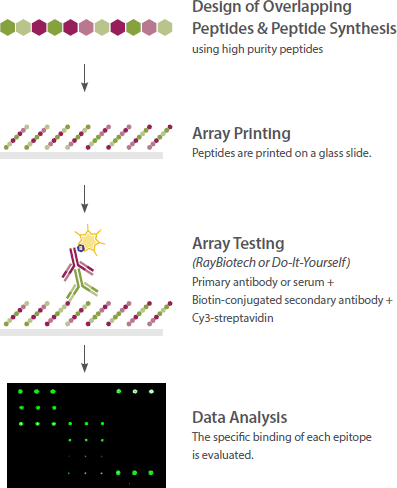 Epitope mapping array - how it works