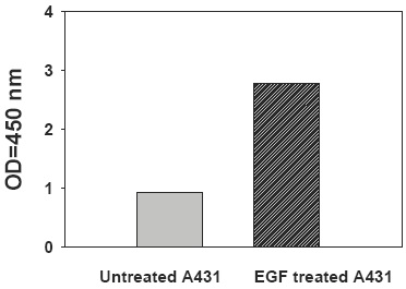 PEL-STAT3-Y-Recombinant-Human-EGF-Stimulation-of-A431-Cell-Lines