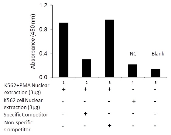 Transcription factor assay of c-Jun from nuclear extracts of K562 cells or K562 cells treated with PMA (50 ng/ml) for 3 hr with the specific competitor or non-specific competitor.