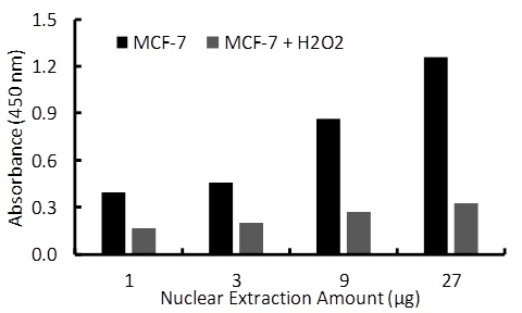 Transcription factor assay of ER-alpha from nuclear extracts of MCF-7 cells or MCF-7 cells treated with H2O2 (200uM) for 3 hr with RayBio Activity Assay Kit