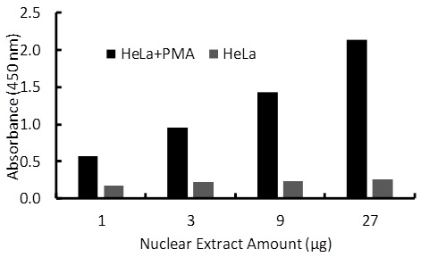Transcription factor assay of Sp1 from nuclear extracts of HeLa cells or HeLa cells treated with PMA (50 ng/ml) for 3 hr with the RayBio Activity Assay Kit