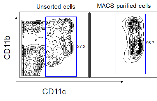 Cell sorting of rare populations by either Magnetic or Flow cytometry assisted cell sorting (MACS or FACS sorting)