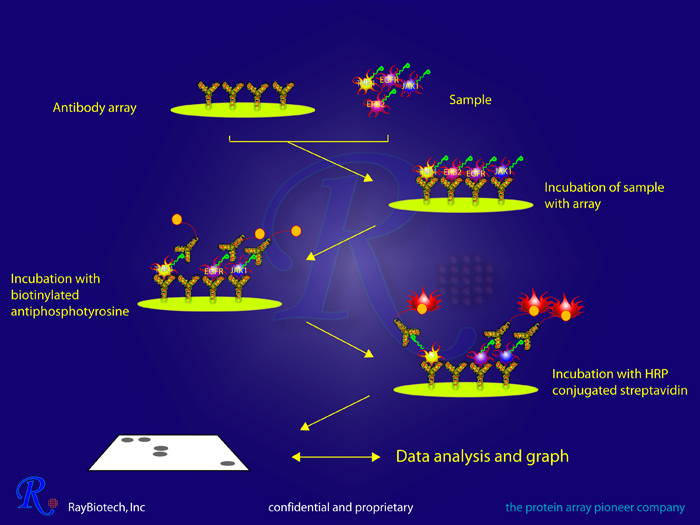 RTK Phosphorylation Array