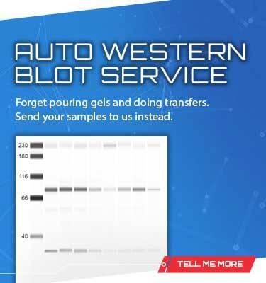 Auto-Western Service