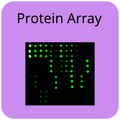 Protein Array