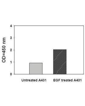 A431 cells were treated or untreated with 100 ng/ml recombinant human EGF for 10 min. Cell lysates were analyzed using this phospho-ELISA.