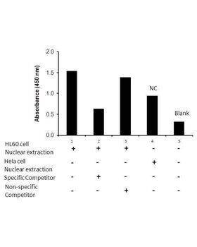 Transcription factor assay of NF-κB RelB from nuclear extracts of HL60 cells or HeLa cells with the specific competitor or non-specific competitor. The result shows specific binding of NF-κB RelB to the NF-κB non-canonical DNA binding site.