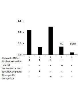 Transcription factor assay of NF-kappaB p50 from nuclear extracts of HeLa cells or HeLa cells treated with TNF-alpha with the specific competitor or non-specific competitor. The result shows specific binding of NF-kappaB p50 to the NF-kappaB canonical DNA binding site.