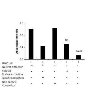 Transcription factor assay of NF-κB p52 from nuclear extracts of HL60 cells or HeLa cells with the specific competitor or non-specific competitor. The result shows specific binding of NF-κB p52 to the NF-κB non-canonical DNA binding site.