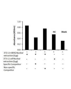 Transcription factor assay of mouse Nrf2 from nuclear extracts of 3T3-L1 cells or 3T3-L1 cells treated with tBHQ (90uM) for 24 hr with the specific competitor or non-specific competitor.