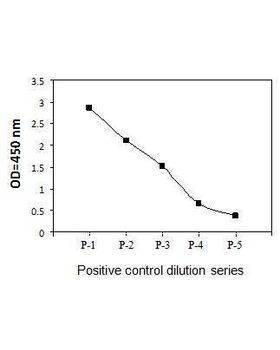 HeLa cells were treated with Calyculin A at 37&deg