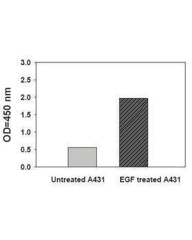 A431 cells were treated or untreated with 100 ng/ml recombinant human EGF for 10 min. Cell lysates were analyzed using this phosphoELISA.
