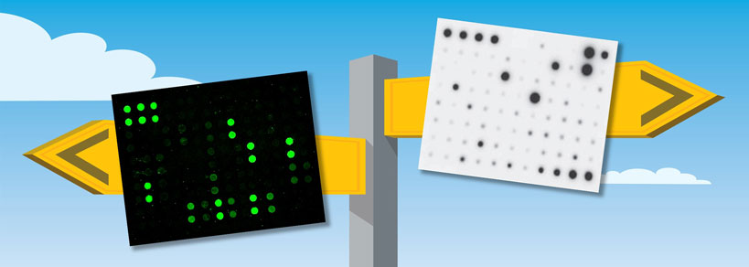 Multiplex Protein Detection with Antibody Arrays